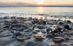 Create a Mini Ocean to Watch How Climate Change Affects Seashells