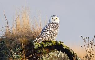 Rare-Bird Sightings: Share or Shut Up?