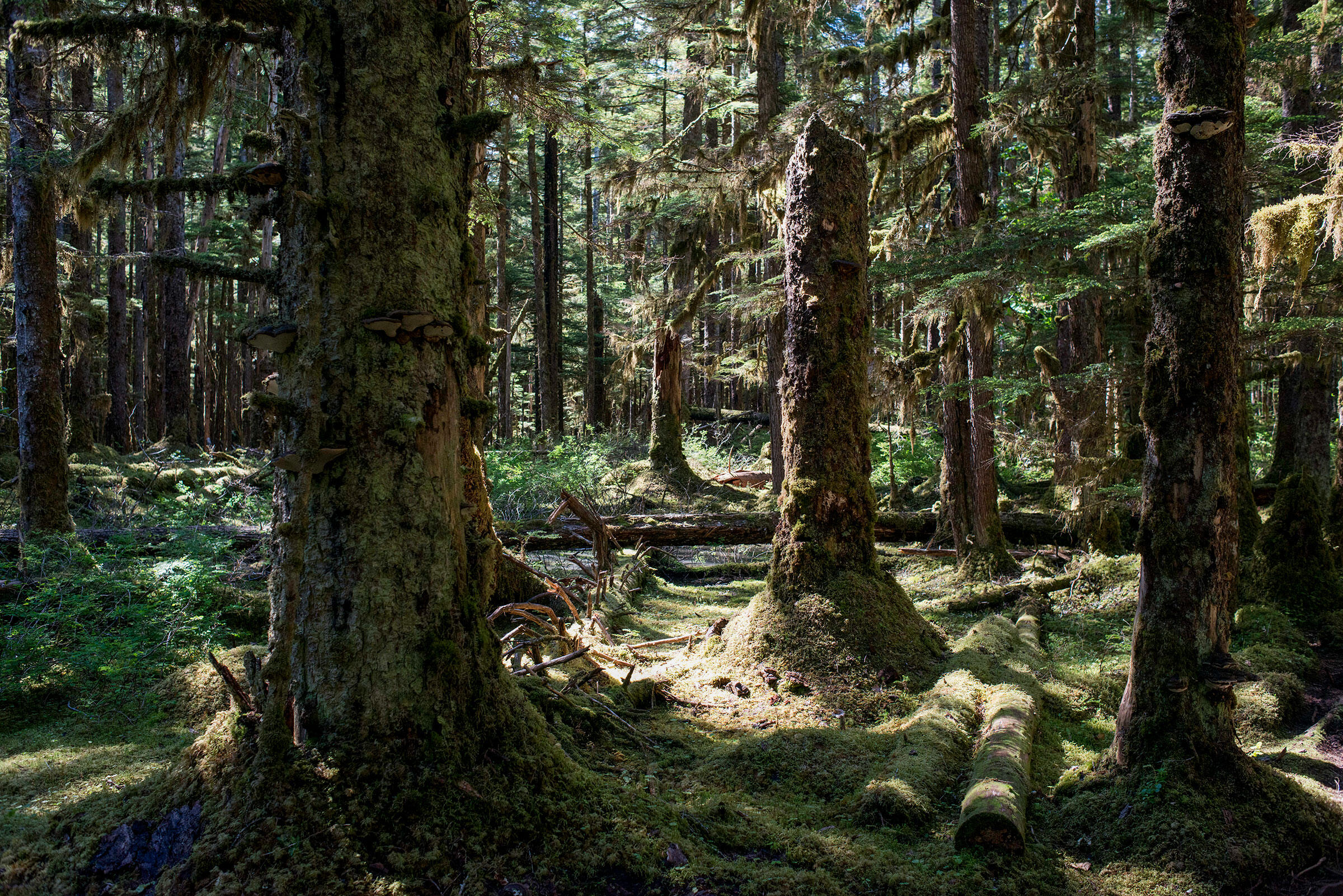 Tongass National Forest, Alaska. Sergi Reboredo/VWPics/Redux