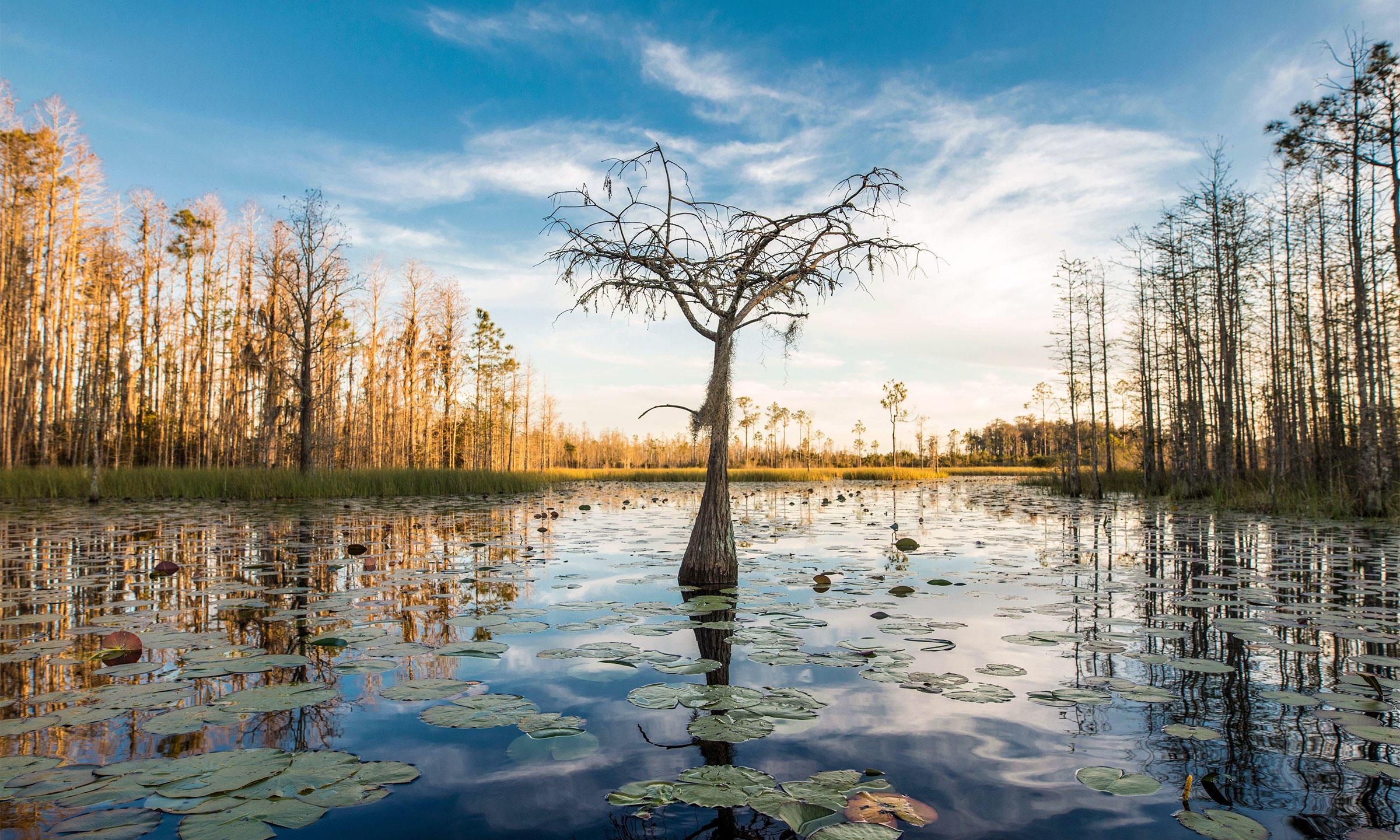 Okefenokee National Wildlife Refuge. John Wollwerth/Alamy