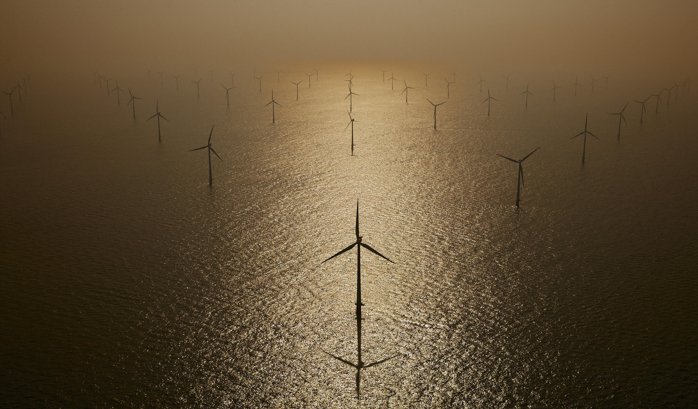 The updated MBTA will protect birds from threats such as wind turbines. Cameron Davidson/Corbis