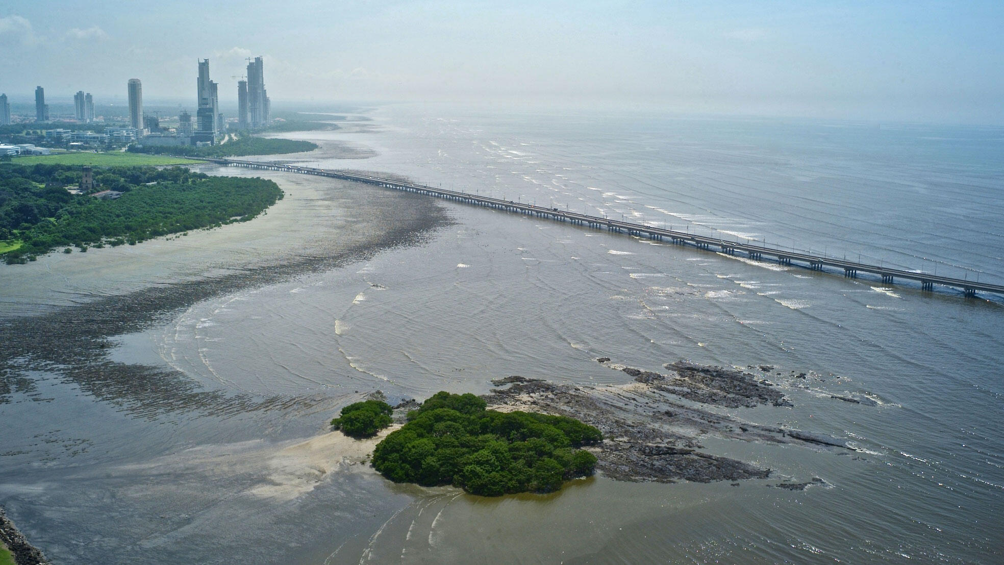 Thanks to its new federal protection, the Bay of Panama will continue to serve as a critical habitat for birds. Kike Calvo/VWPics.
