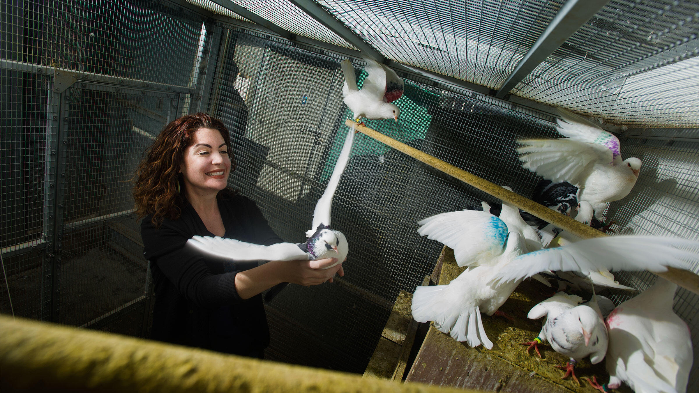 Rebecca Calisi was a co-author on the new study that found varying gene expressions among male and female Rock Pigeons. The results could have huge implications for future research. Karin Higgins/UC Davis