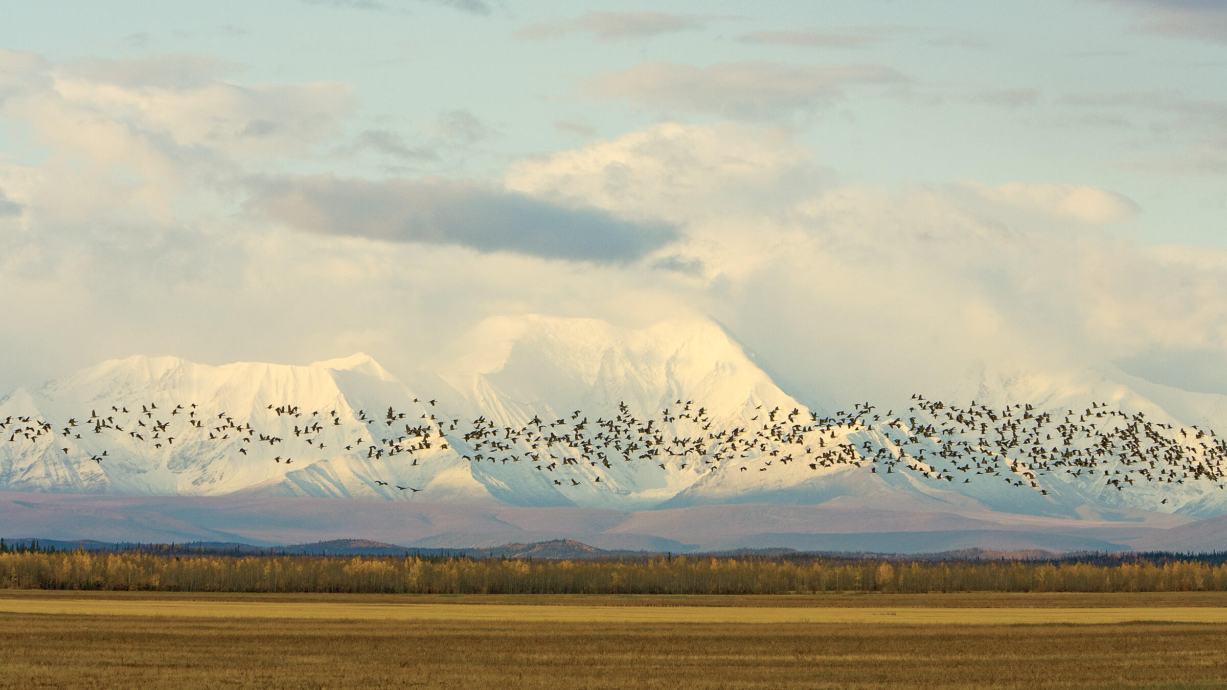 Sandhill_Cranes_Alaska_Minden