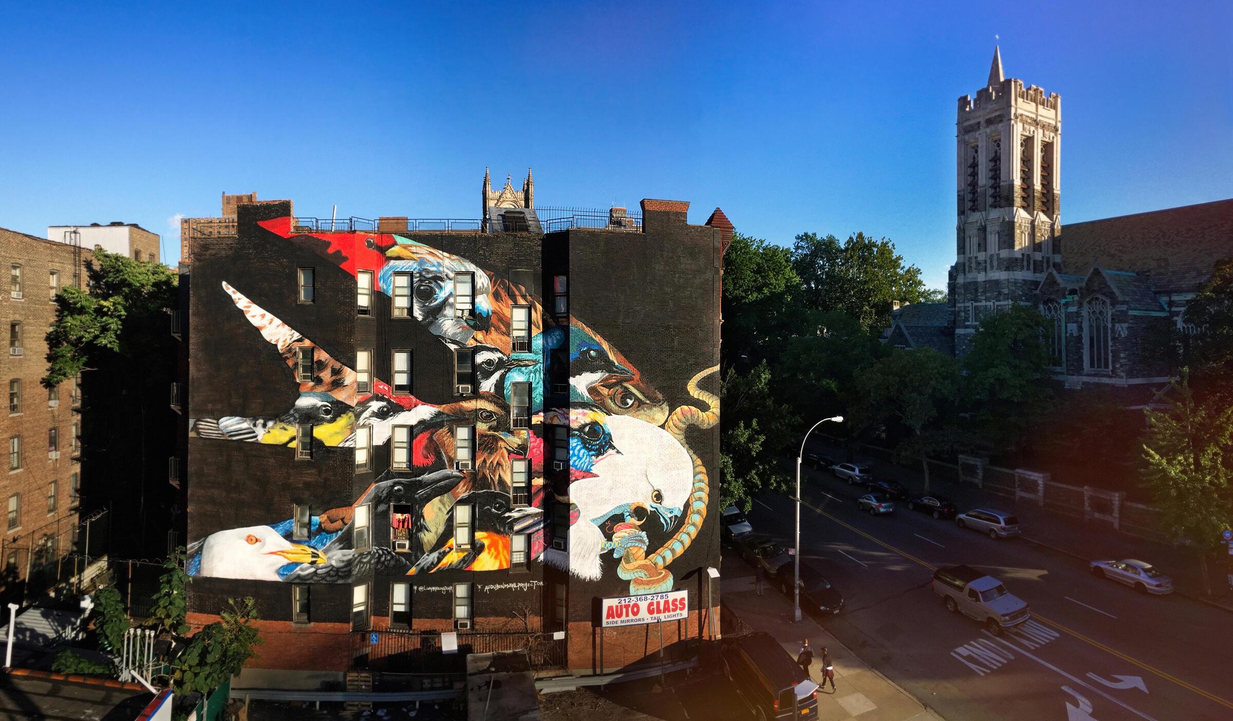 El mural de Elanio Tijereta contiene otras 12 especies amenazadas por el clima. La torre de iglesia que se aprecia a la derecha del mural, es el sitio de descanso final de John James Audubon. Mike Fernandez/Audubon