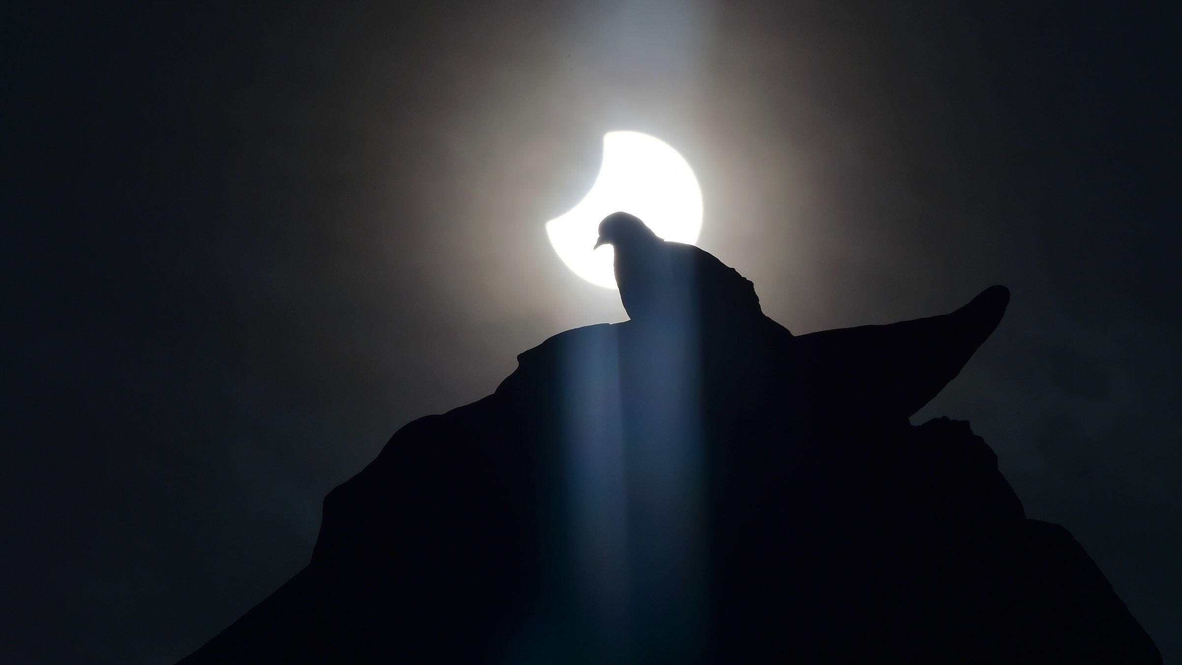 A partial solar eclipse frames a pigeon. How do the birds react when the lights go out? Scientists want you to help them figure it out. Giuseppe Cacace/AFP/Getty Images