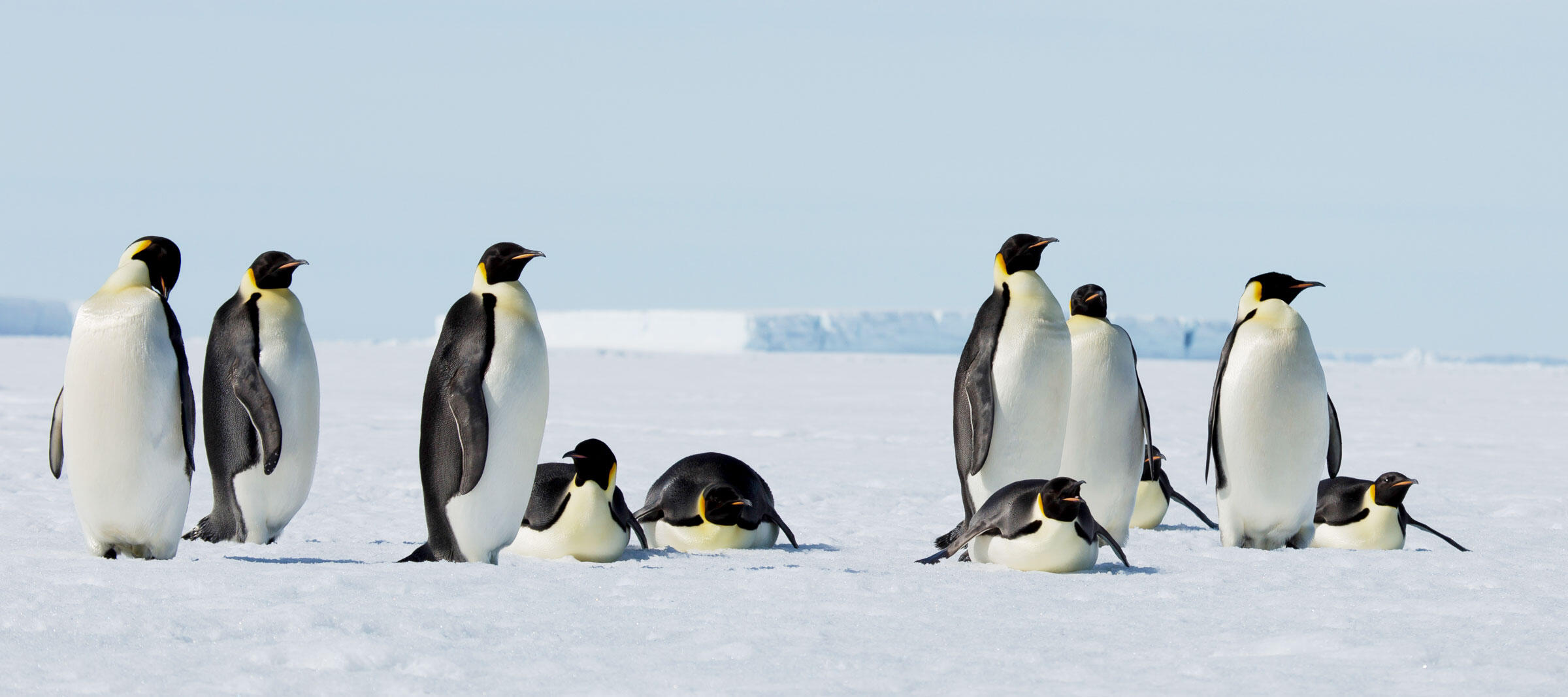 Emperor Penguins. James Lusk/Audubon Photography Awards