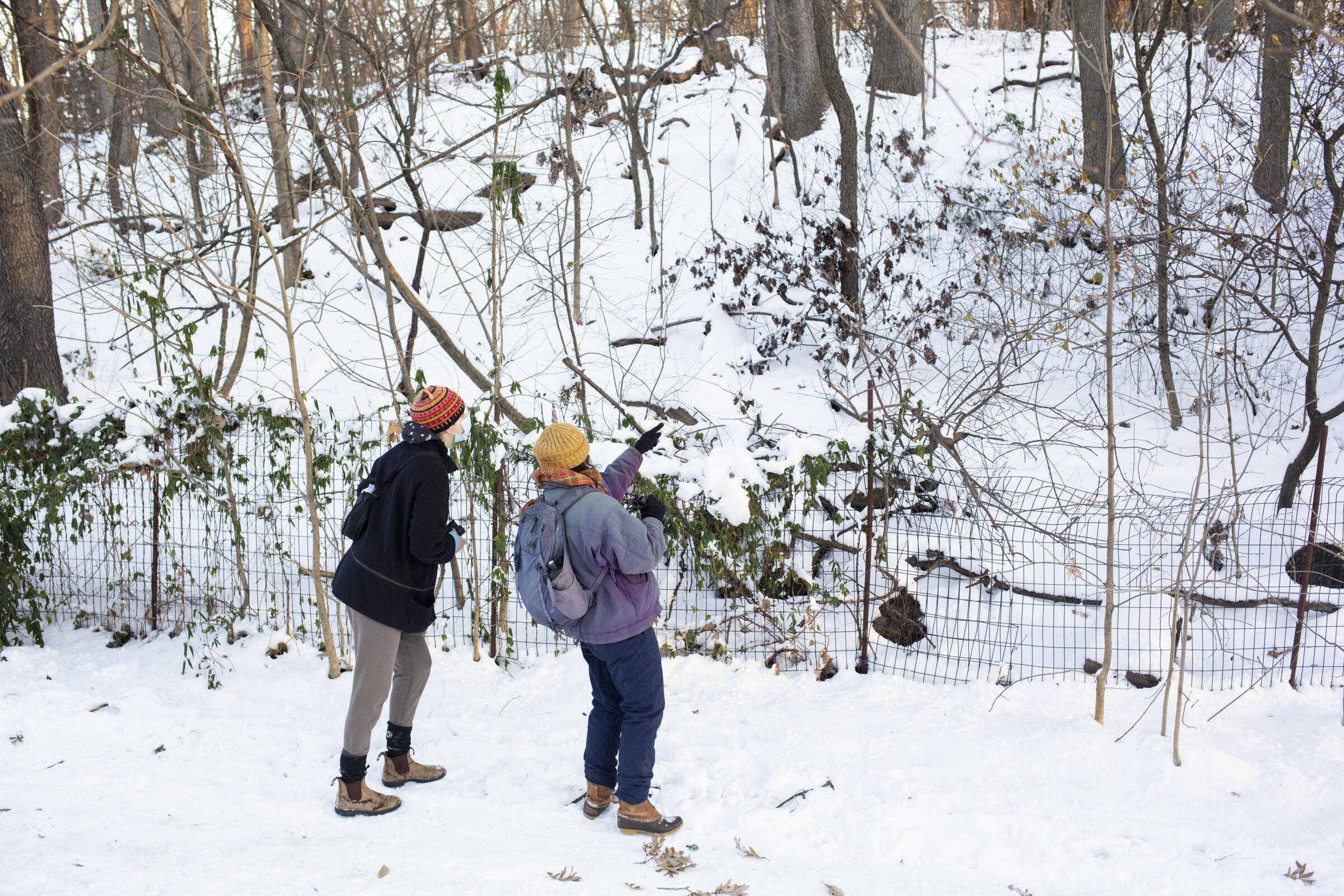 Volunteers from the Brooklyn Bird Club participate in the 121st Christmas Bird Count in Prospect Park, Brooklyn in December 2020. Luke Franke/Audubon