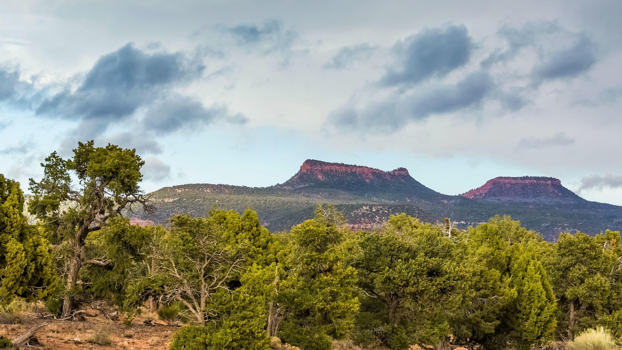 Piñon-juniper forest surrounding Bears Ears National Monument. Lee Rentz/Alamy