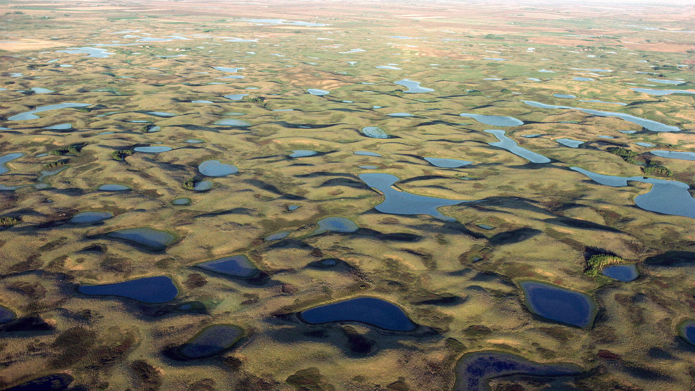 Aerial view of prairie pothole region, a unique area where shallow depressions created by the scouring action of glaciation creates wetland habitat, South Dakota. Jim Brandenburg/Minden Pictures