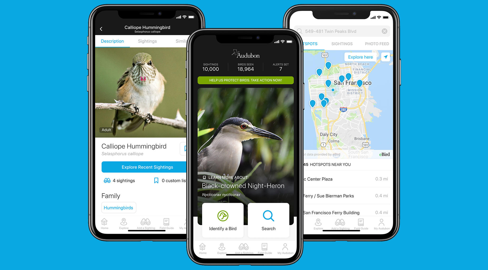 A look at the upcoming Audubon Bird Guide Spring 2020 update