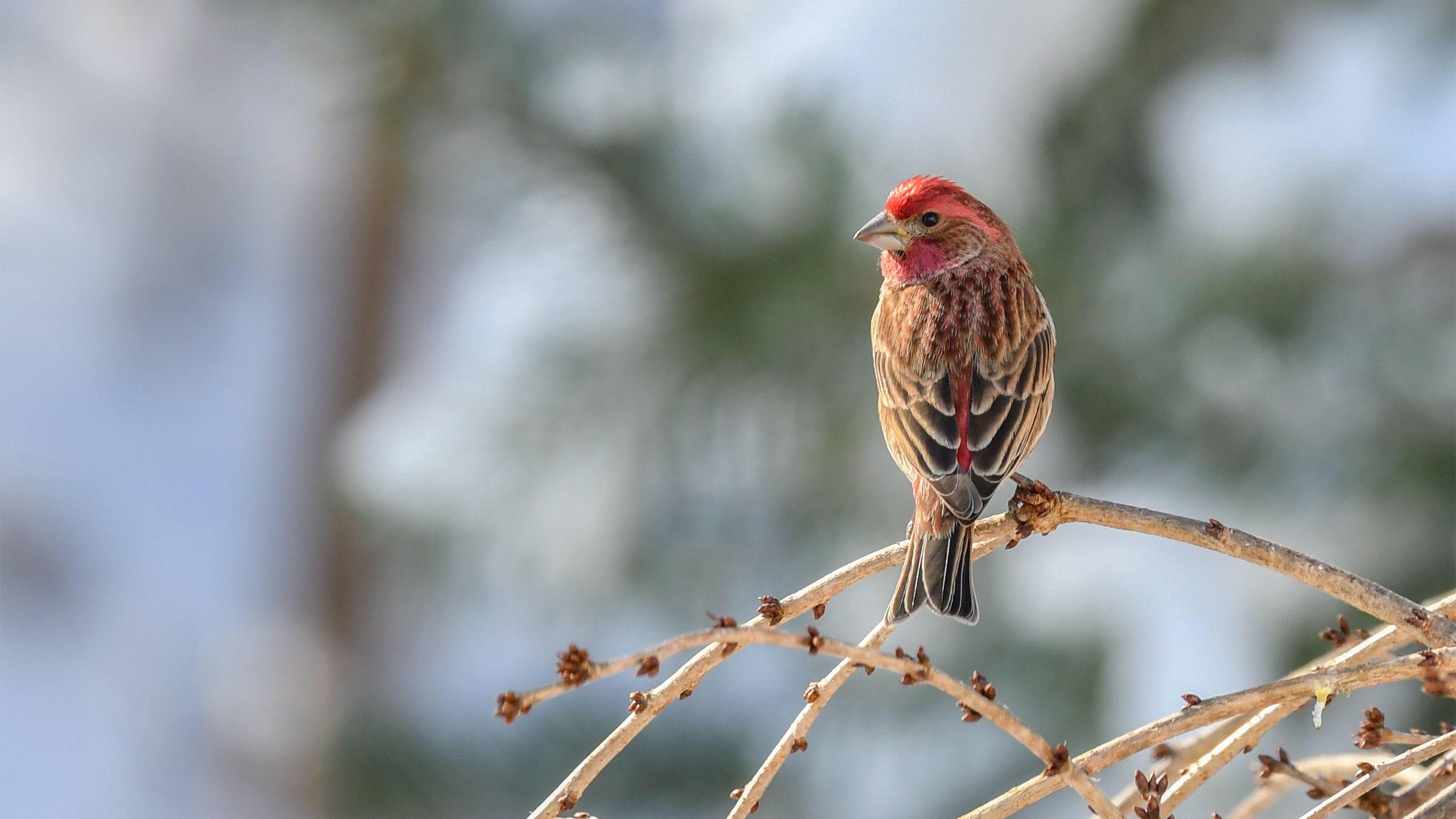 Summary of the 119th Christmas Bird Count, 2018-2019   Audubon