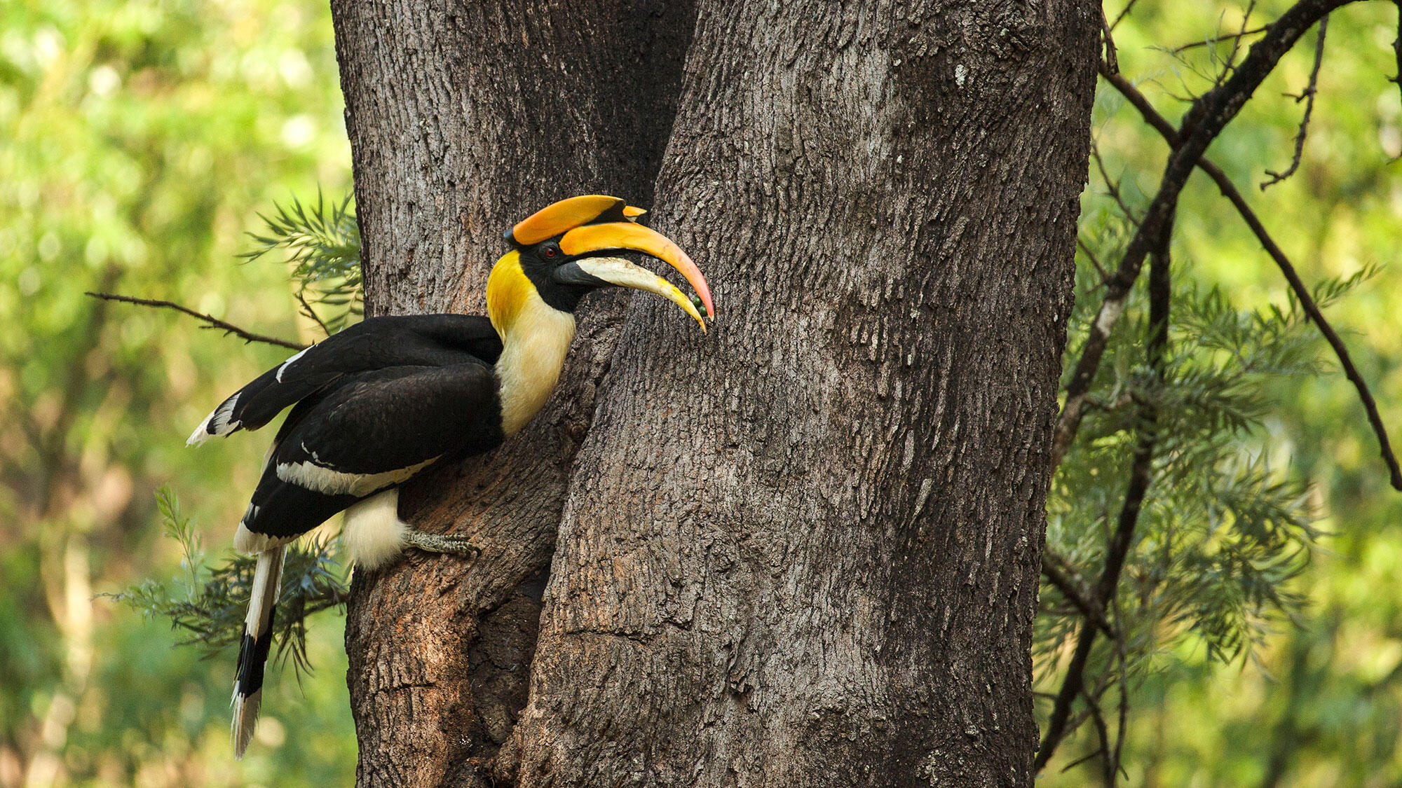 Snake Bird And Mountain Echo What Traditional Names Teach Us About Birds Audubon