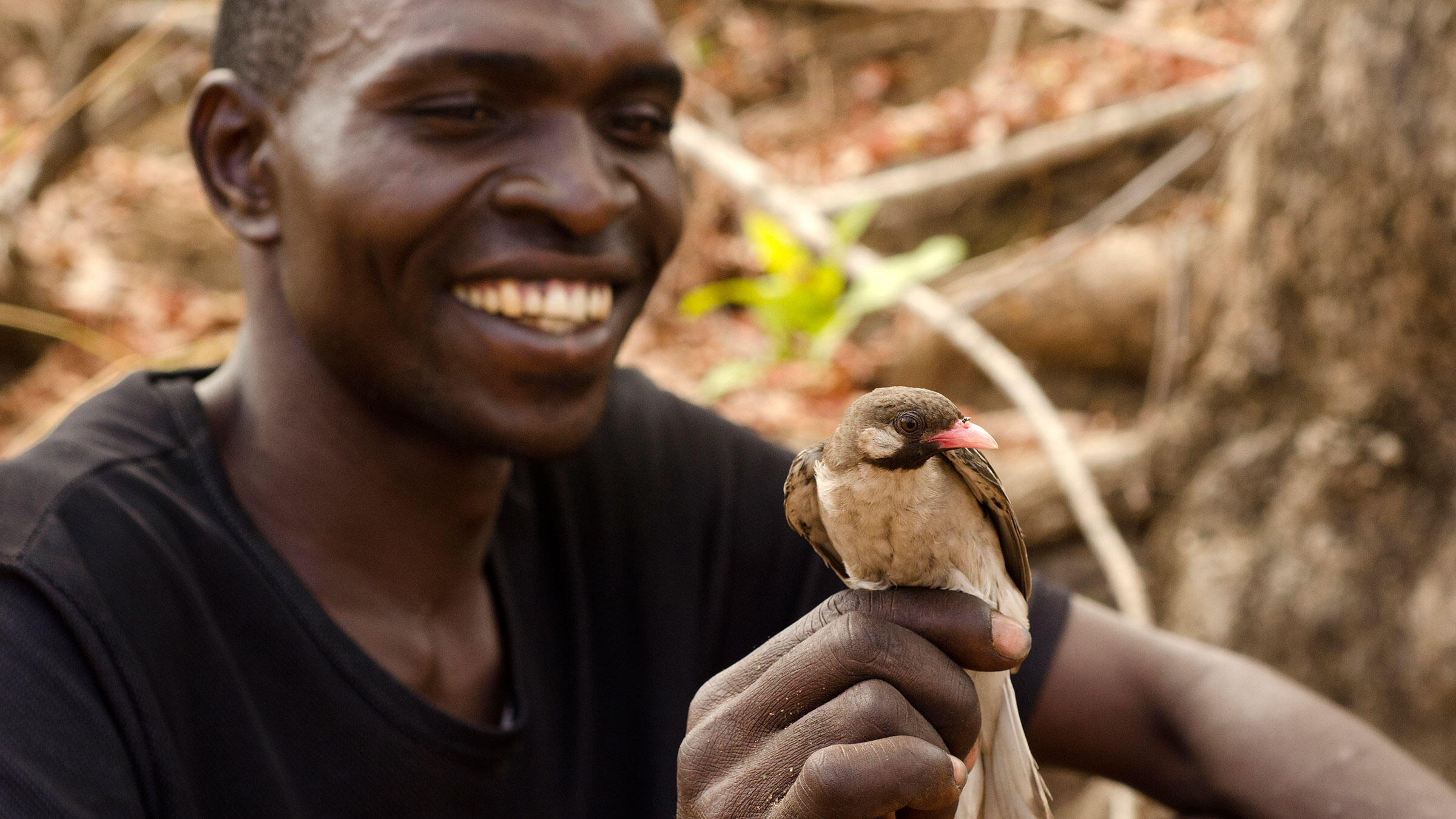 Orlando Yassene holding a wild Greater Honeyguide in northern Mozambique. Yasenne is of the Yao culture, which forms alliances with birds to scout out beehives. Claire Spottiswoode