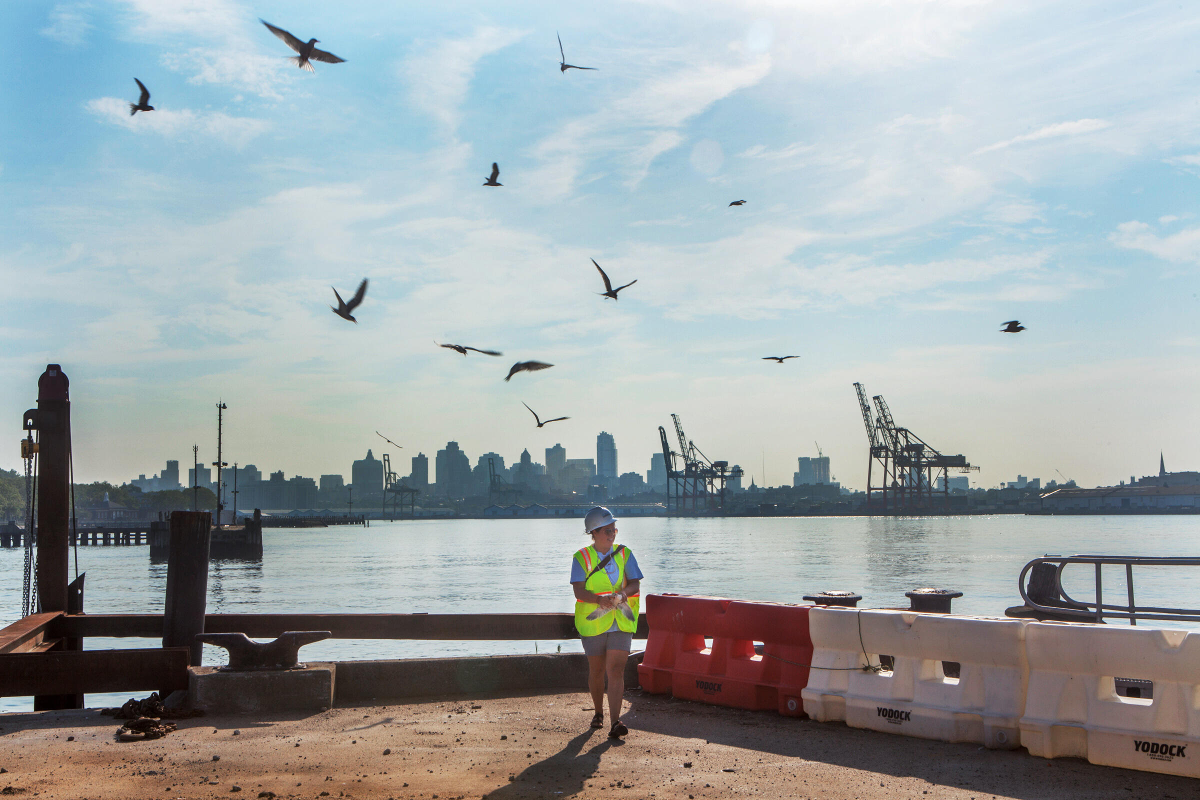Elizabeth Craig, an avian researcher at Cornell University, is surrounded by Common Terns on Governors Island, New York, as she bands the chick in her hand. Camilla Cerea/Audubon