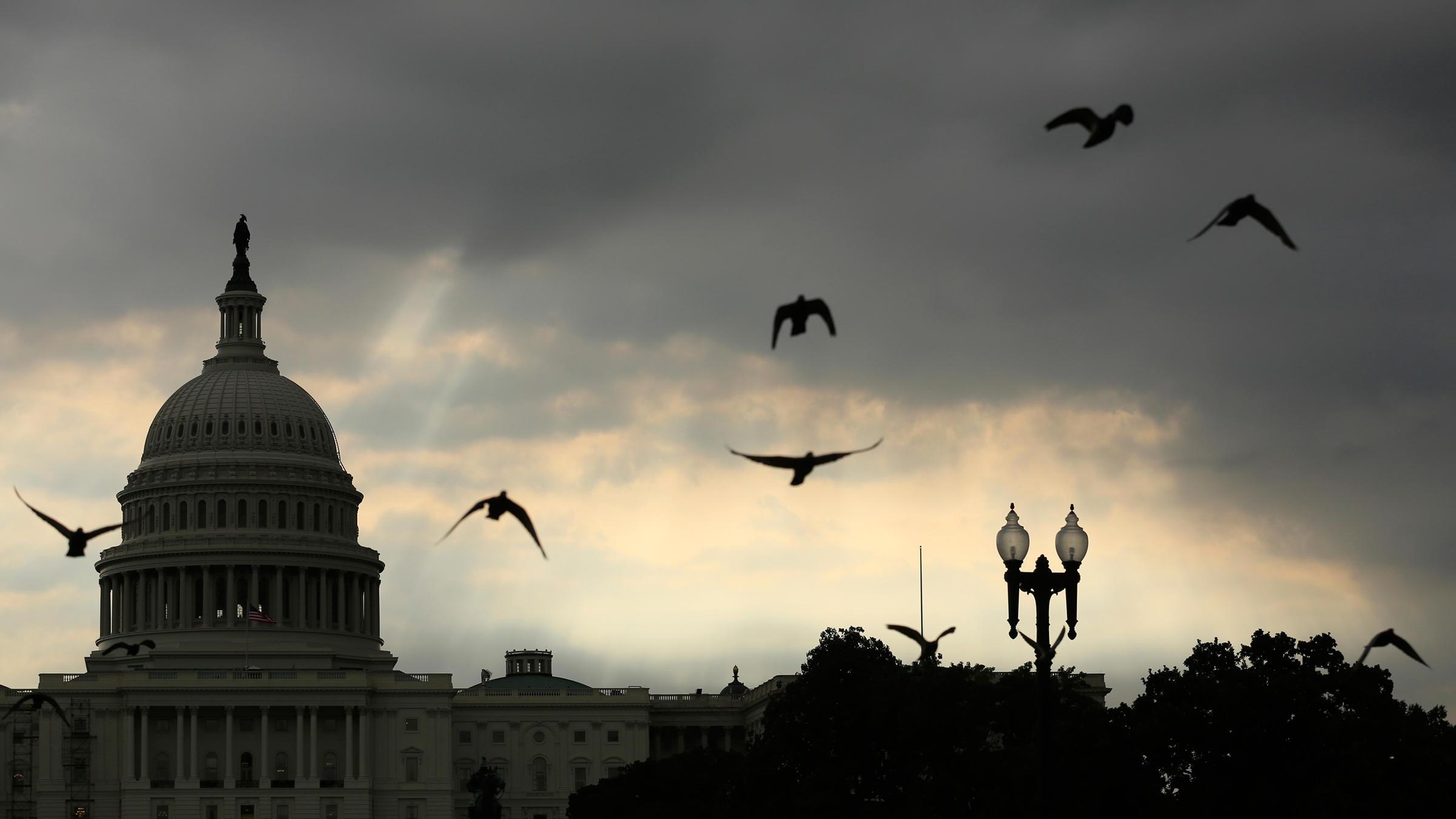 Rock Pigeons fly past the U.S. Capitol building in Washington, D.C. Kevin Lamarque/Reuters/Corbis
