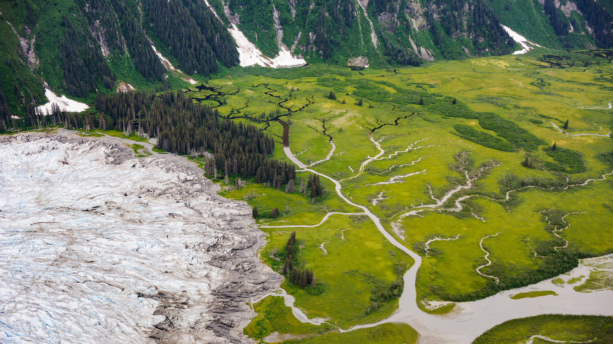 The 17 million acres of ancient trees, glaciers, valleys, and peat bogs in the Tongass offer up a habitat smorgasbord for the myriad species that live there. Mark Meyer