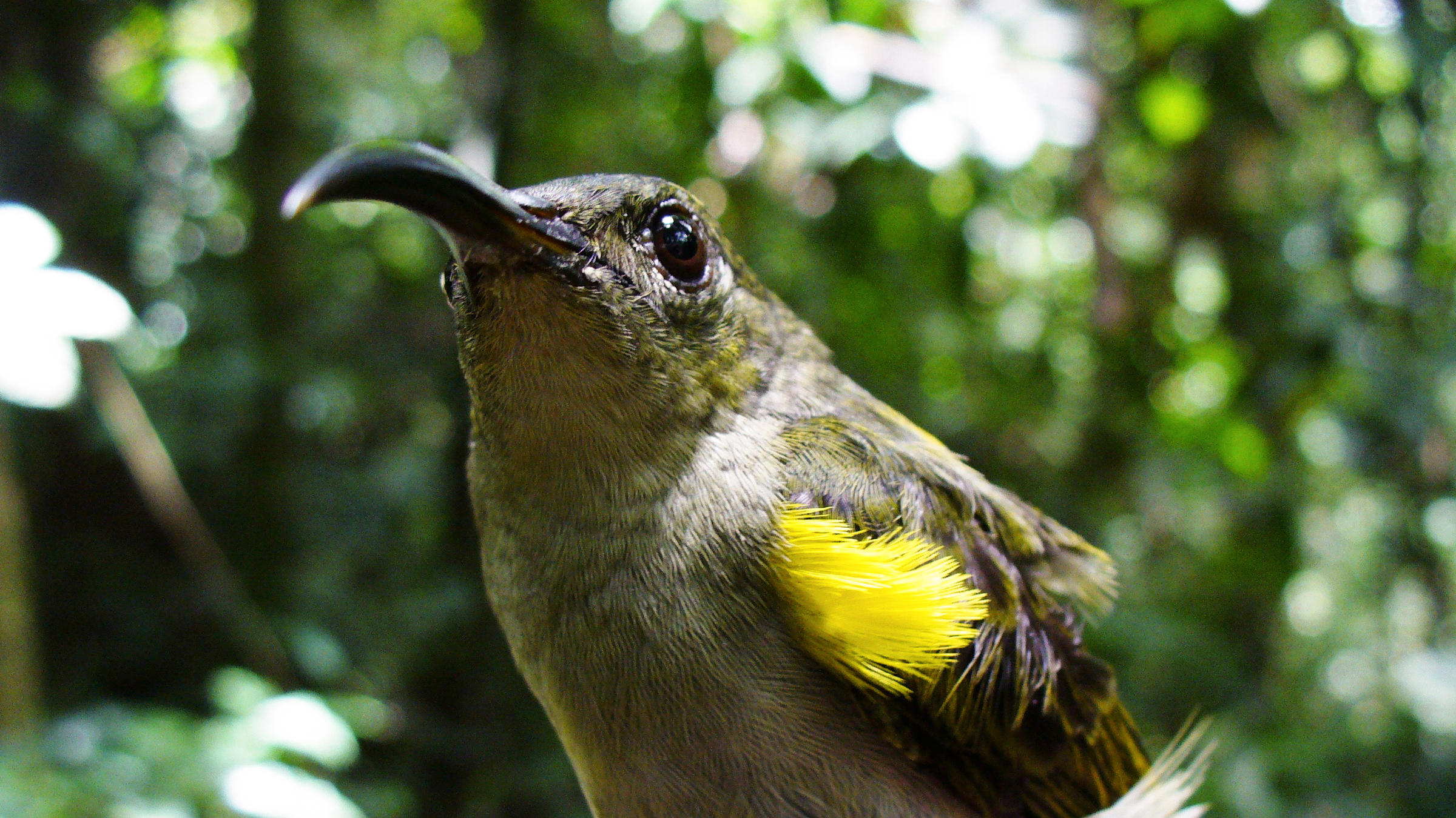 Over 15 years, the Olive Sunbird's population declined by approximately 50 percent. Nicole Arcilla