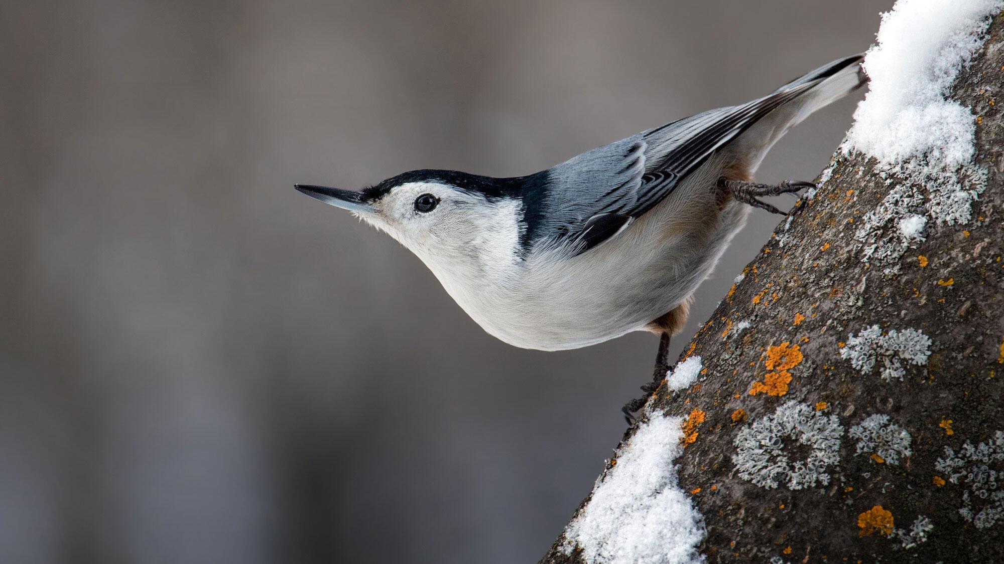 57 Top Photos Audubon Backyard Bird Count - Bergen County ...