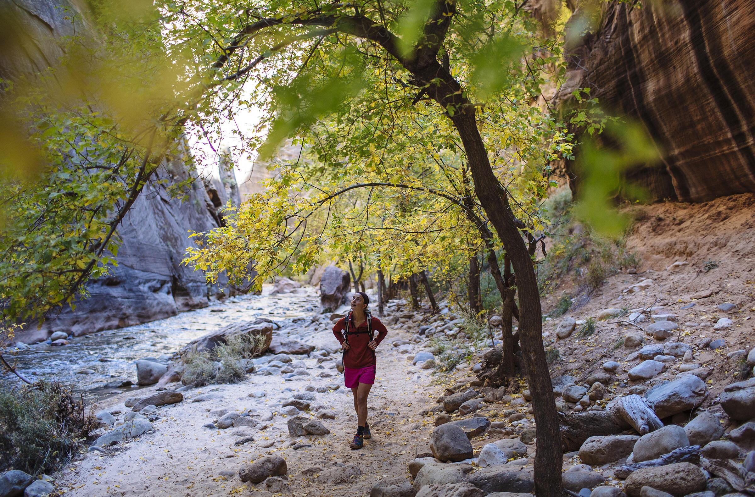 Zion National Park, Utah. Matthew Van Biene/Tandemstock.com