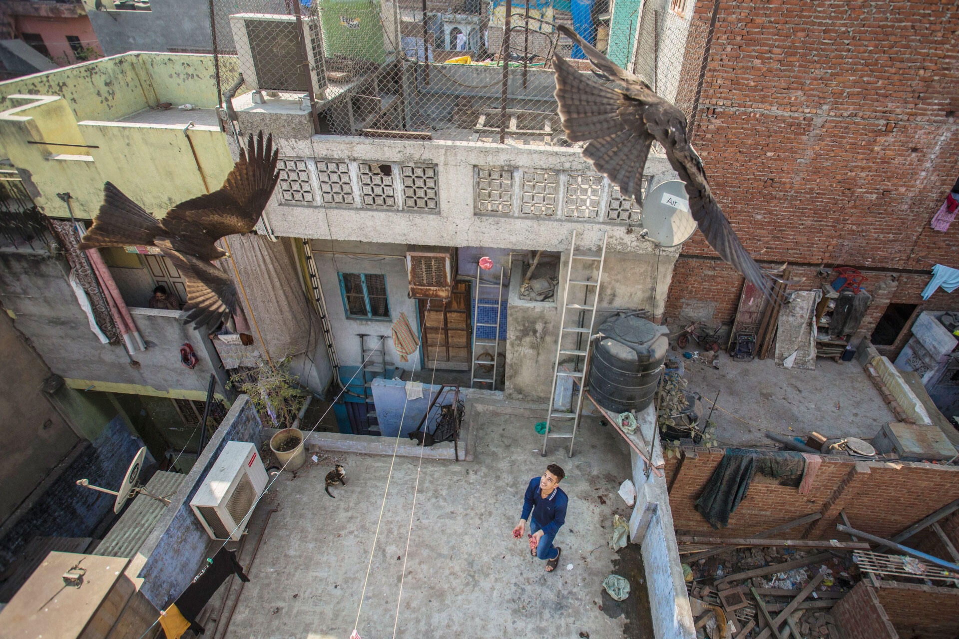 A young man tosses meat scraps to Black Kites as an act of atonement in Delhi's Muslim quarter. Luke Massey