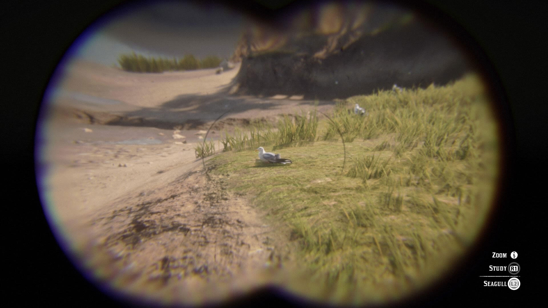 Herring Gull through Red Dead Redemption 2's in-game binoculars. Image: Courtesy of Rockstar Games