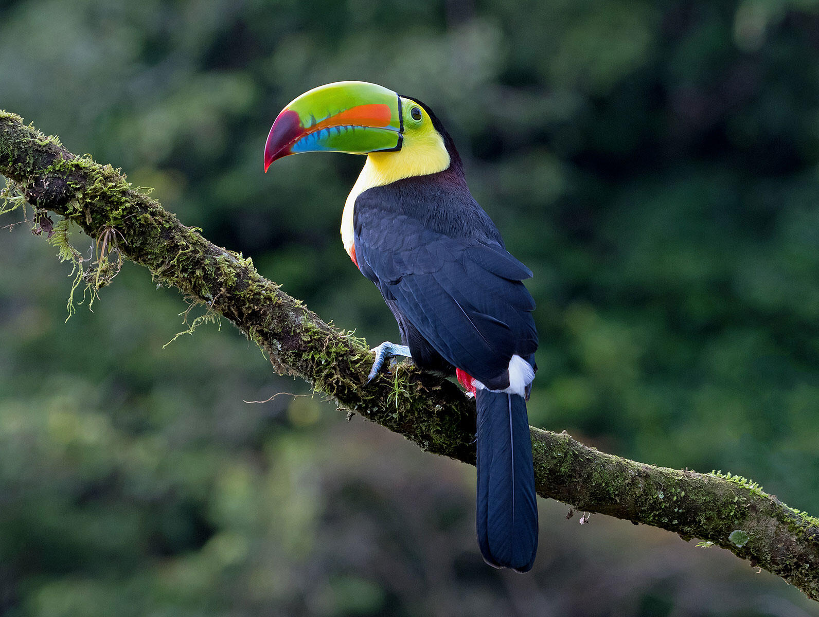 With the help of a sharp-eyed guide, travelers to Tikal could spot the brilliant Keel-billed Toucan. Doug Greenberg/Flickr CC (BY-NC 2.0)