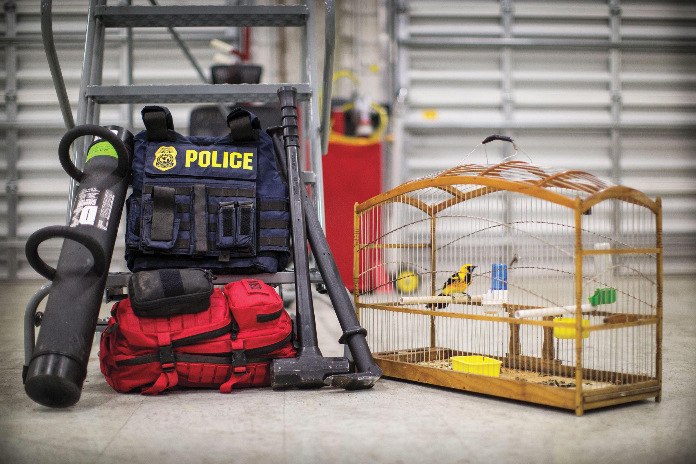 Una oropéndola sentada en una jaula confiscada por la unidad de caza furtiva encubierta del Servicio de Pesca y Vida Silvestre de los EE. UU.