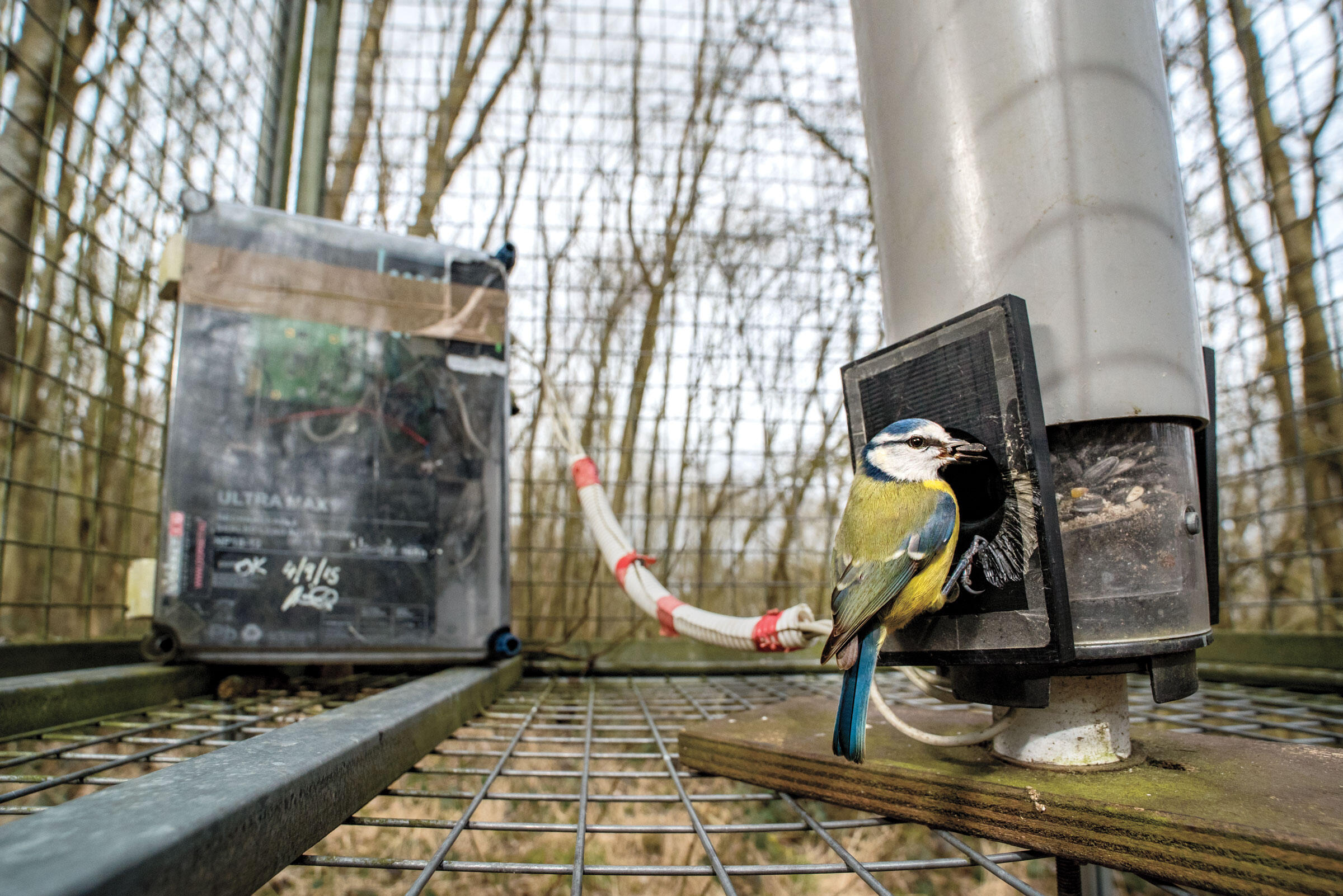 A Blue Tit near Oxford University in England perches on a selective feeder that unlocks only for certain tagged birds. A micro-SD card housed in a slot in the circuit board stores data about which birds visit. Sam Hobson