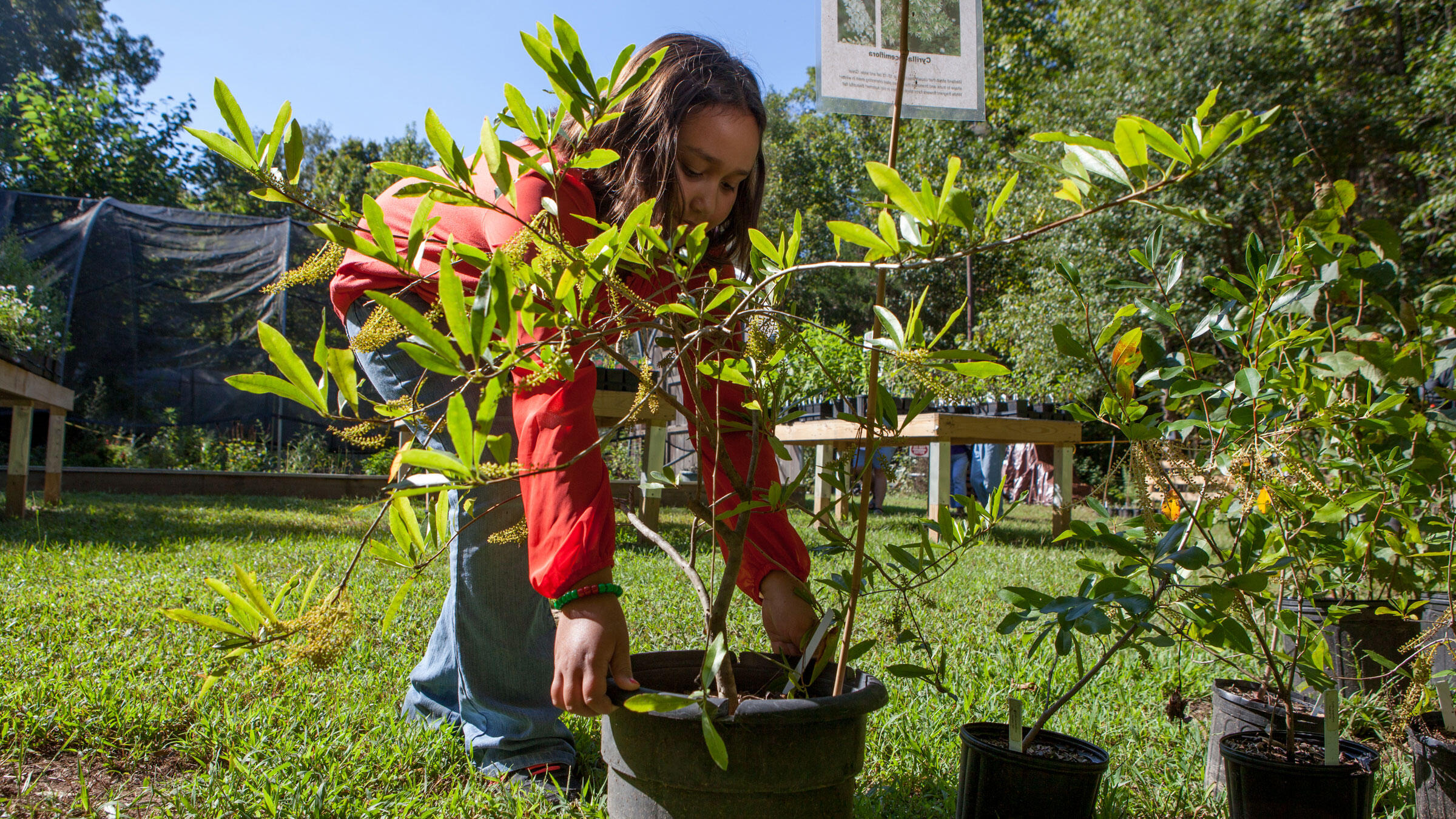 A visitor at the 2015 Strawberry Plains Audubon Center Native Plant Sale in Holly Springs, Mississippi. Camilla Cerea/Audubon