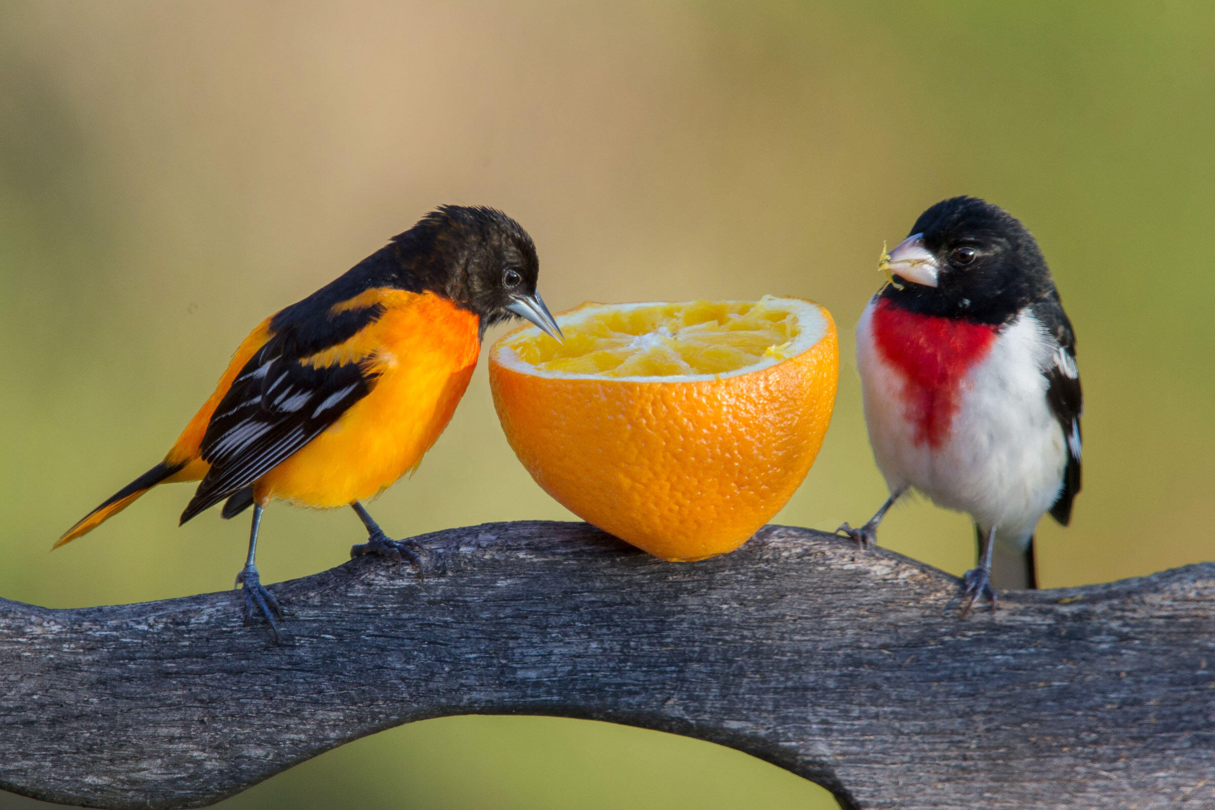 When It S Okay Or Not To Feed Birds Audubon
