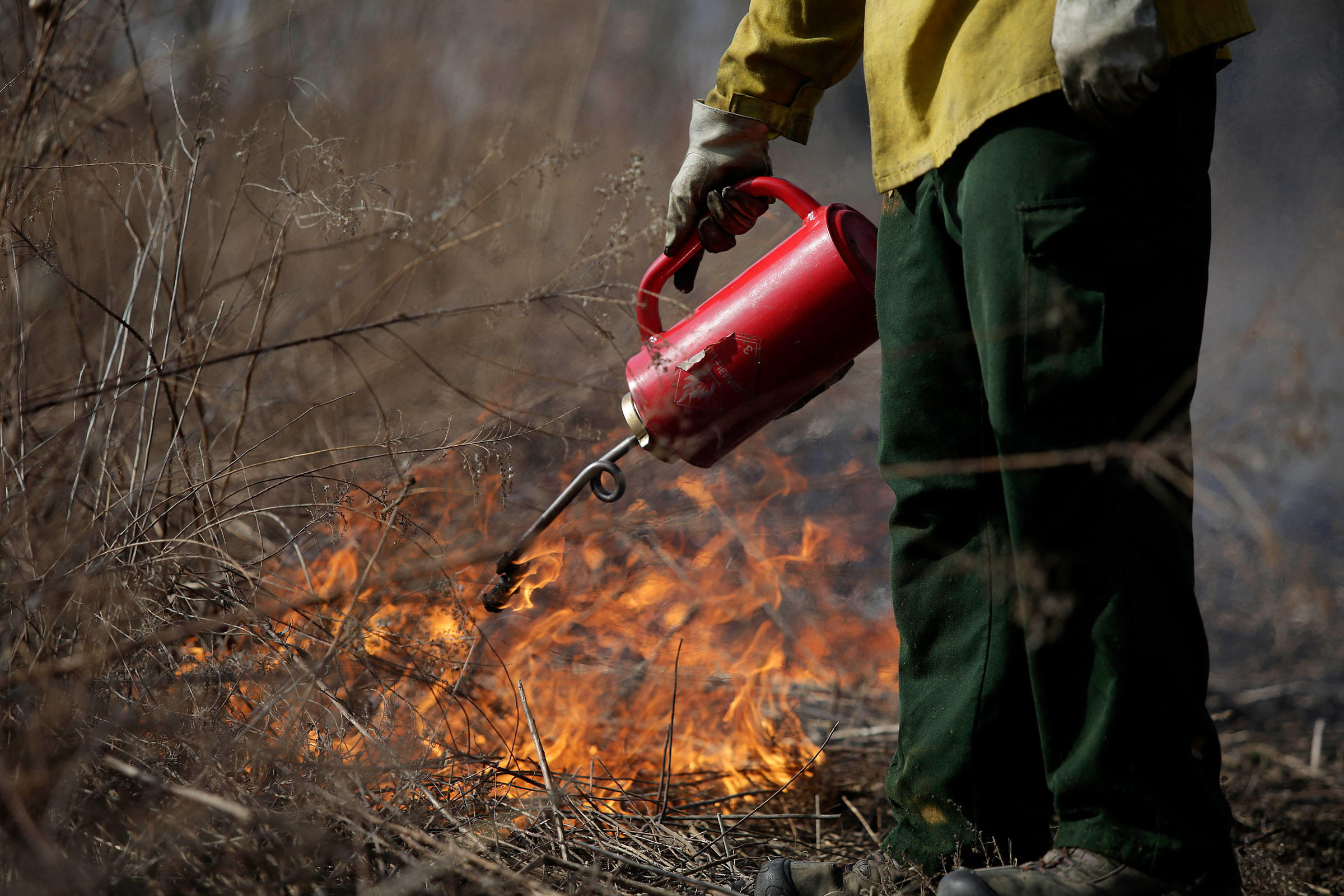 By torching brush at Indian Ridge Marsh in Chicago, Audubon Great Lakes and its partners are clearing the way for a new, more bird-filled landscape. Joshua Lott