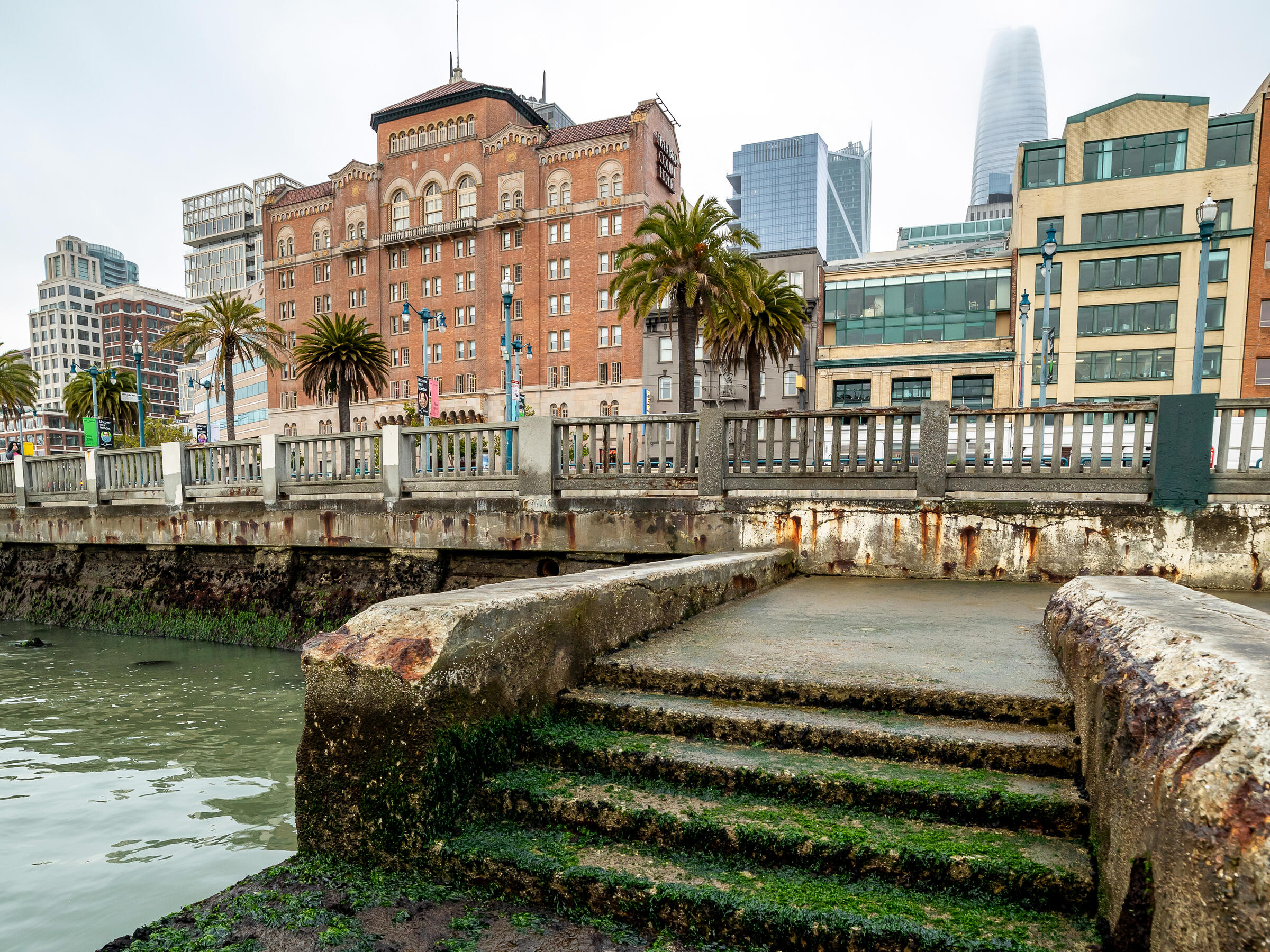 Wet steps overgrown with algae lead from San Francisco Bay up to a concrete fence—the Embarcadero Seawall along the San Francisco business district. The overgrown algae signals how frequently the infrastructure floods due to sea level rise. A row of high-rise buildings and palm trees are in the background behind the seawall.