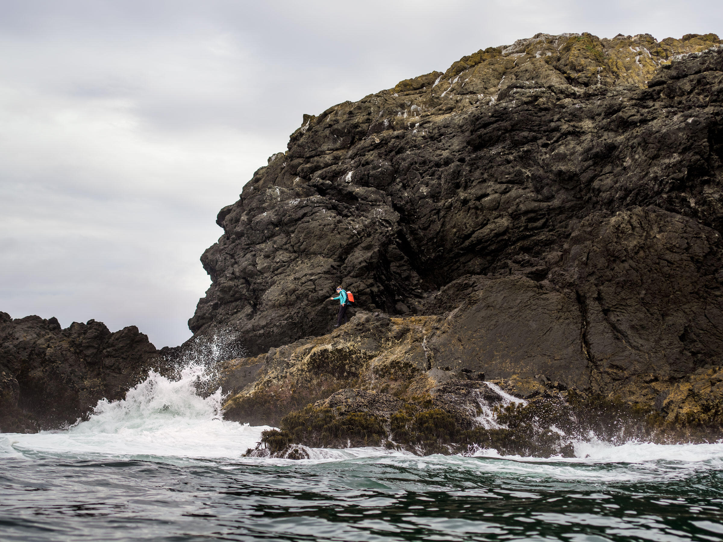Biologist Emma Kelsey scales Green Rock, off of Northern California, to collect an acoustic monitor. It's been recording for six months as part of an Ashy Storm-Petrel project. Jim McAuley