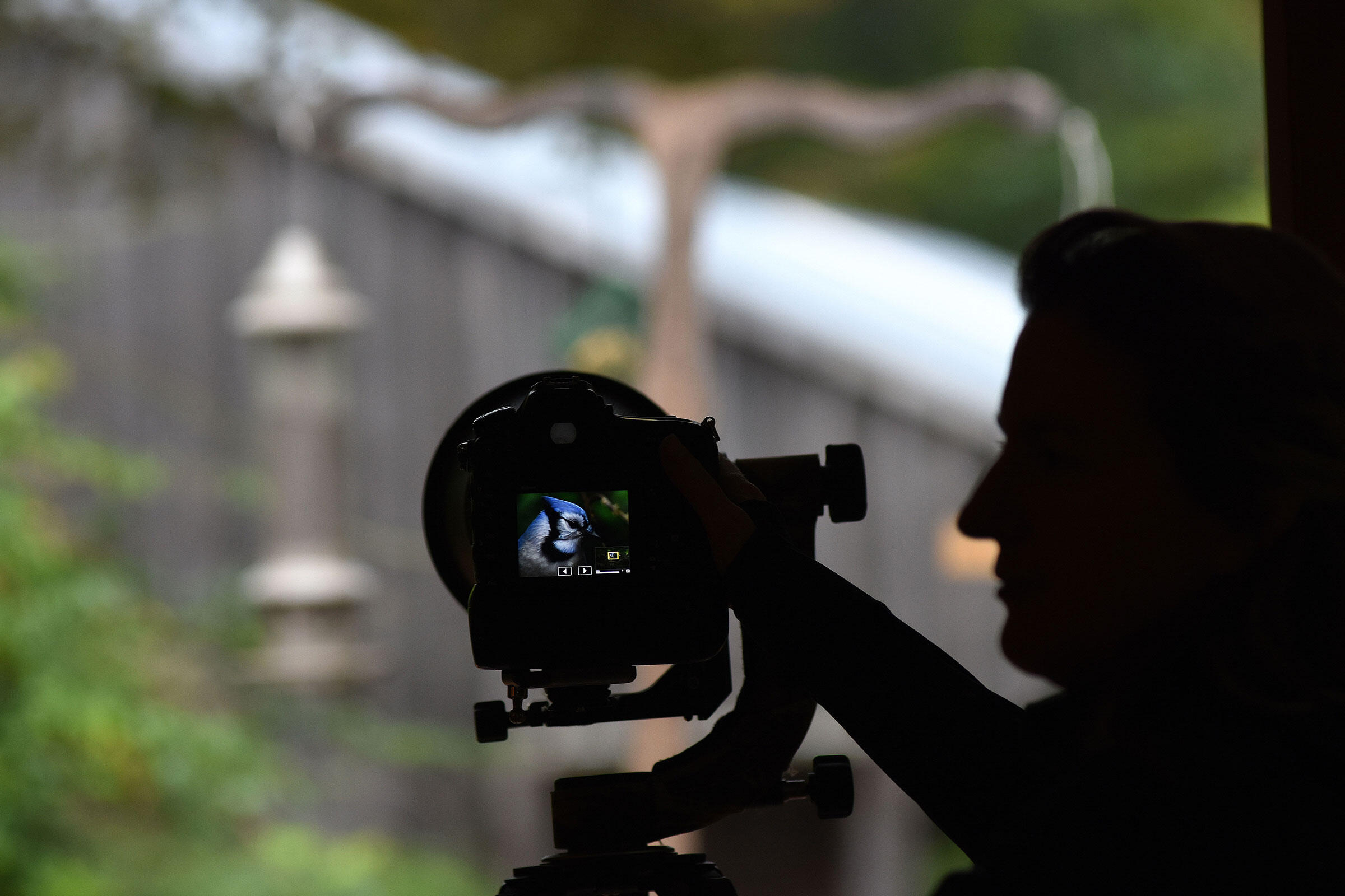 Melissa Groo photographing a Blue Jay. Heather Ainsworth