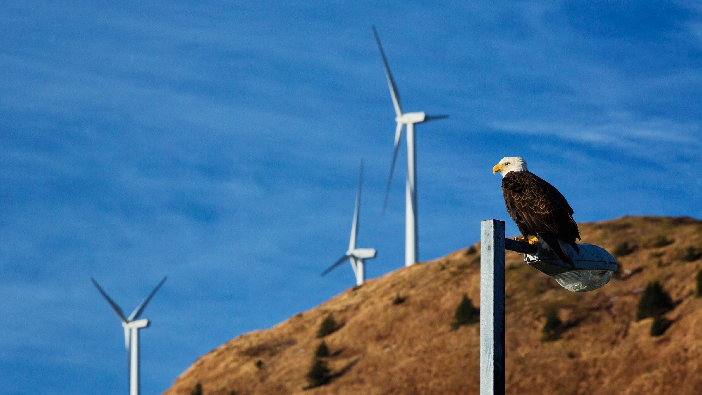 Bald Eagle. Design Pics Inc/National Geographic Creative