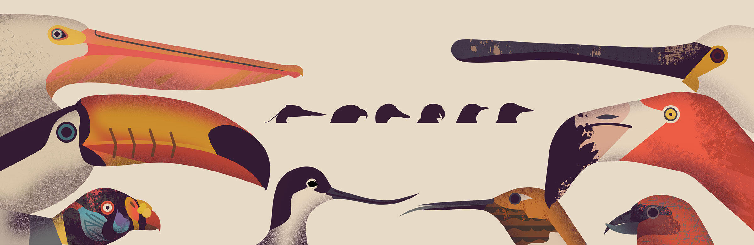 Poster of bird beaks from Natural World by Amanda Wood and Mike Jolley. Illustrated by Owen Davey