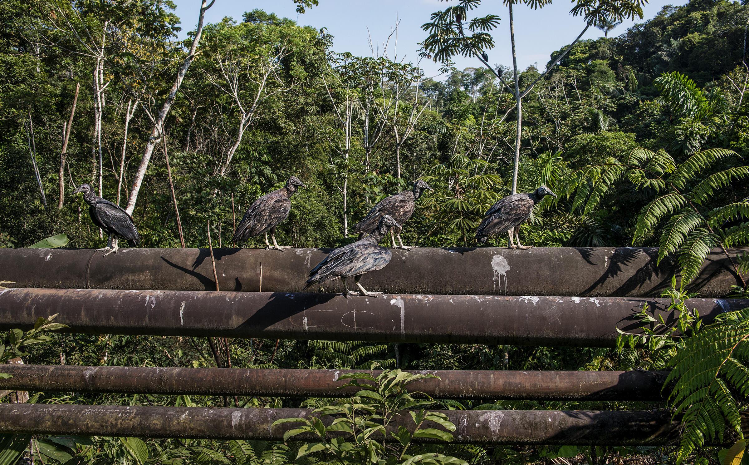 Mientras Las Empresas Petroleras Realizan Perforaciones En El Parque Nacional Yasuni Los Ecuatorianos Ofrecen Resistencia Audubon El museo tierra de dinosaurios llegará a la cdmx el 23 de julio y permanecerá abierta hasta el 8 de septiembre, en horario de 10:00 a 18:00 todos los días. mientras las empresas petroleras