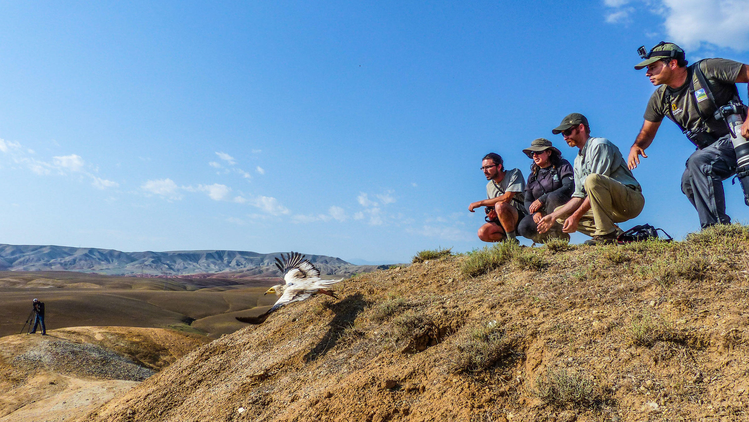 An Egyptian Vulture is released in eastern Turkey with a satellite tracking device that allows detailed monitoring of its movements. The crew (from left to right): Cagan Sekercioglu, Evan Buechley, Lale Aktay, and Joshua Horns. Kayahan Argikaya