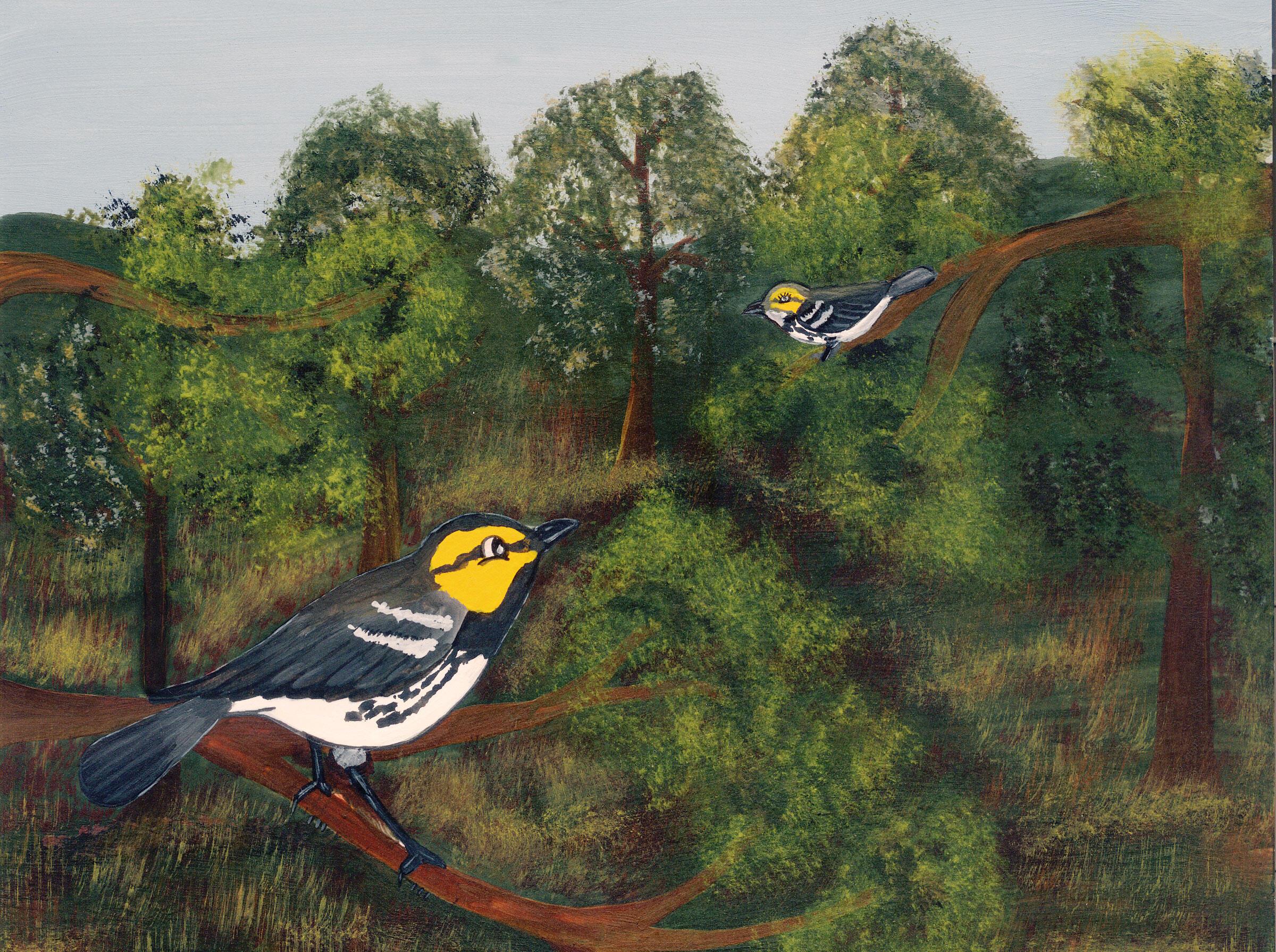 Two Golden-cheeked Warblers painted by José Raul Vázquez Perez for the book La Historia de Chipilo Crisopario. Jorge Silva Rivera