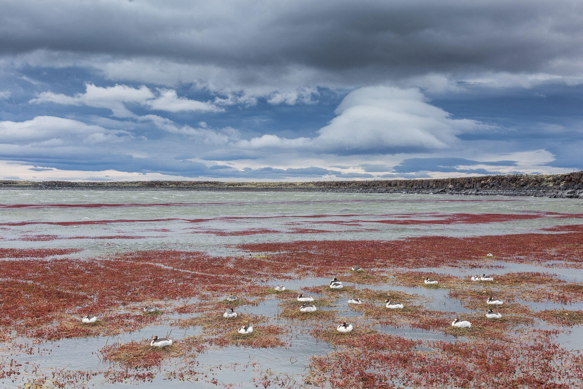 The Strobel plateau is famous for its brutal and constant winds, like the ones stirring up the water in the background of this picture. Hooded Grebes nest in the most sheltered area of the lake. Ugo Mellone