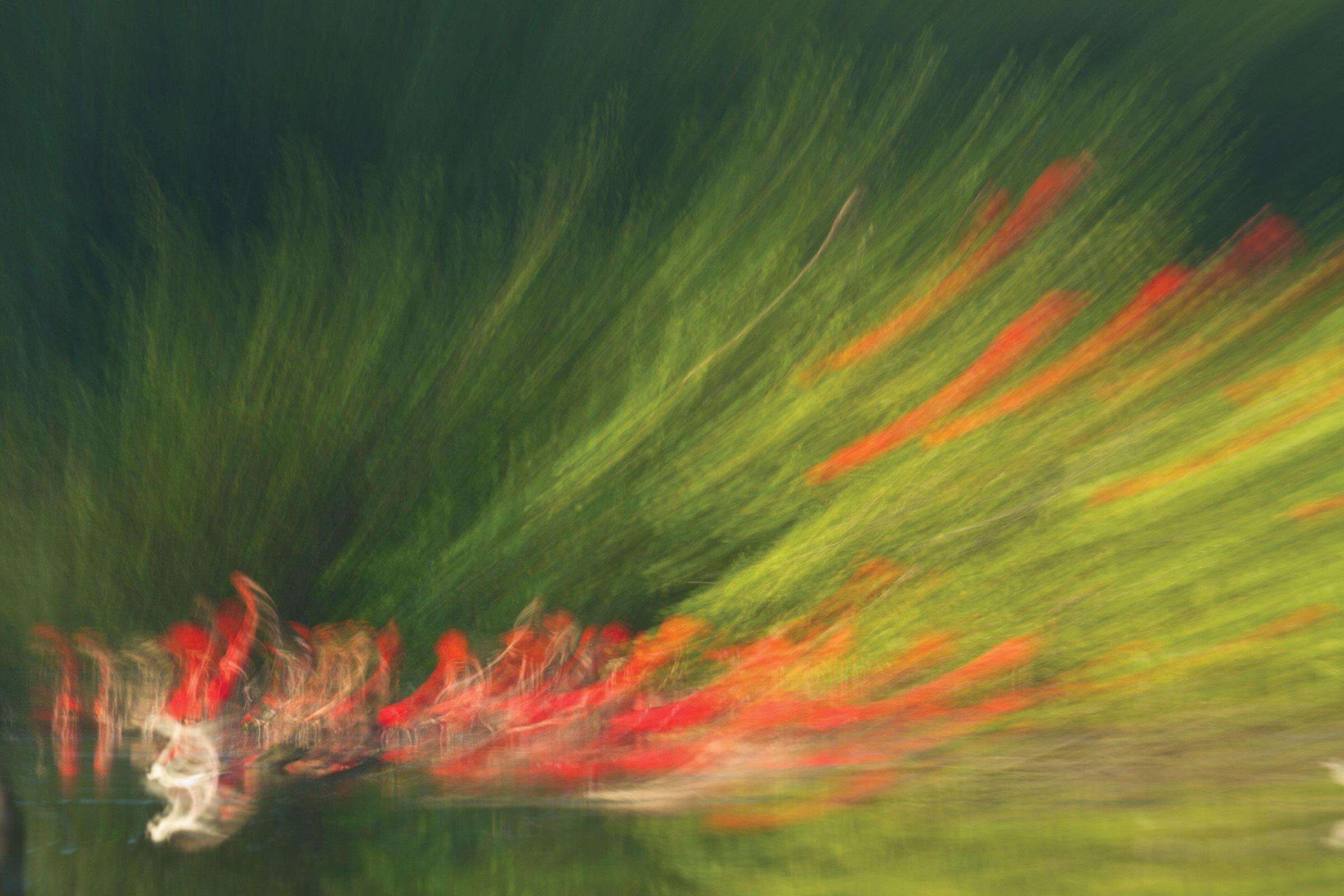 Scarlet Ibises and Snowy Egret, using zoom blur. Faraaz Abdool