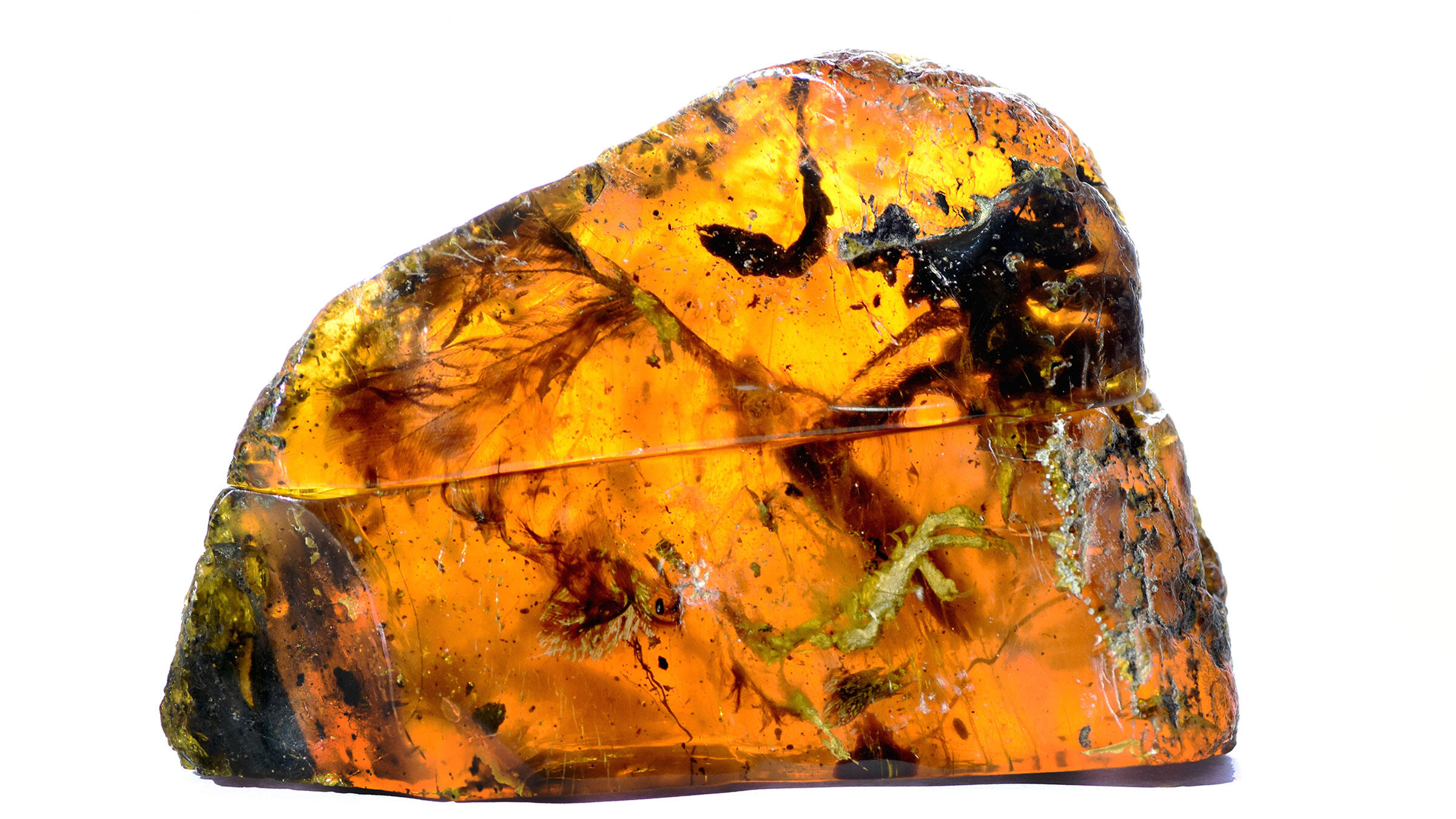 When the amber is lit from behind, the location and size of the bird's individual body parts are much easier to distinguish. Lida Xing/China University of Geosciences, Beijing