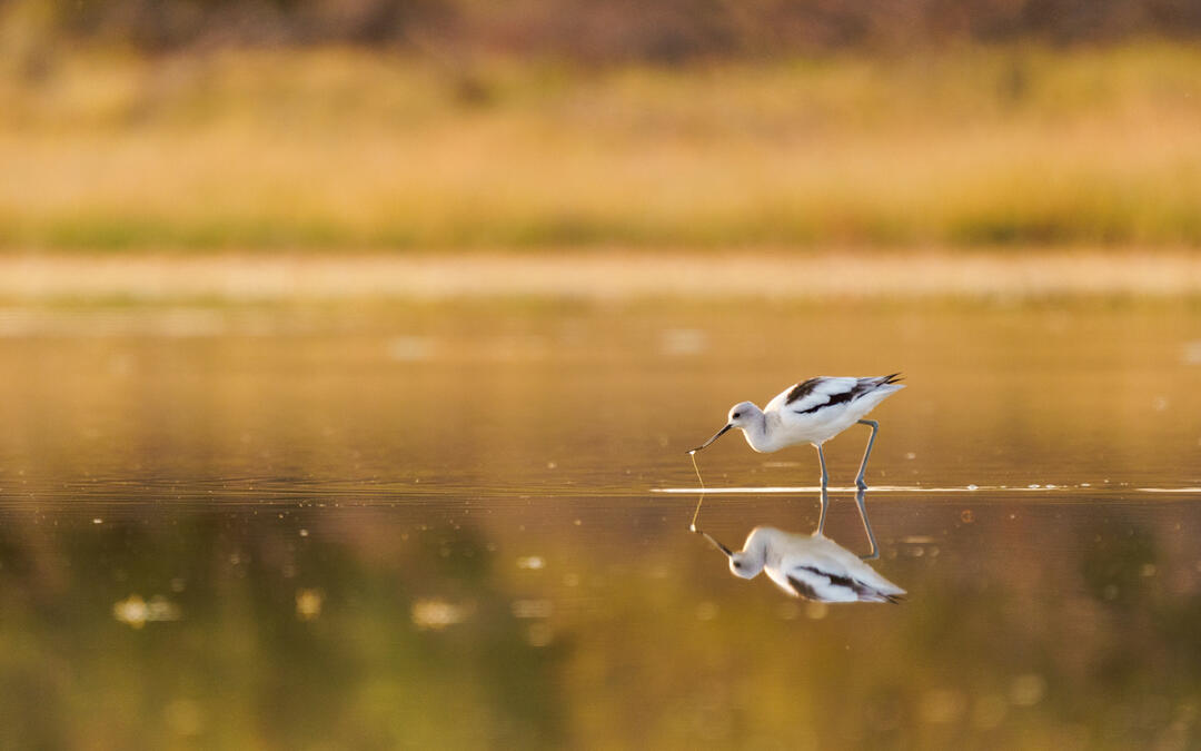 US House of Representatives Introduces Audubon-supported Saline Lake Ecosystems Bill | Audubon - National Audubon Society