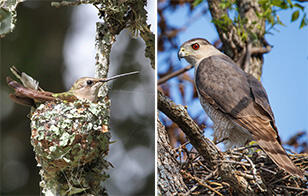 www.audubon.org