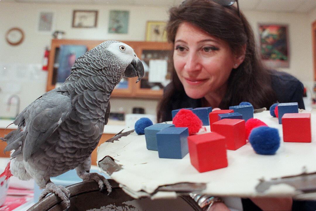 Why Do Parrots Talk Audubon
