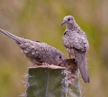 Adult. Ben Knoot/Audubon Photography Awards
