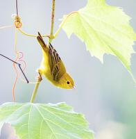 Adult female. Gregory Seitz/Audubon Photography Awards
