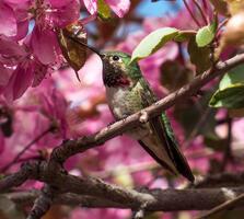 Adult male. Ann Larson/Audubon Photography Awards