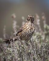 Adult. Sharon Lindsay/Audubon Photography Awards